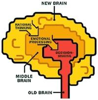 Cerveau publicite Facebook